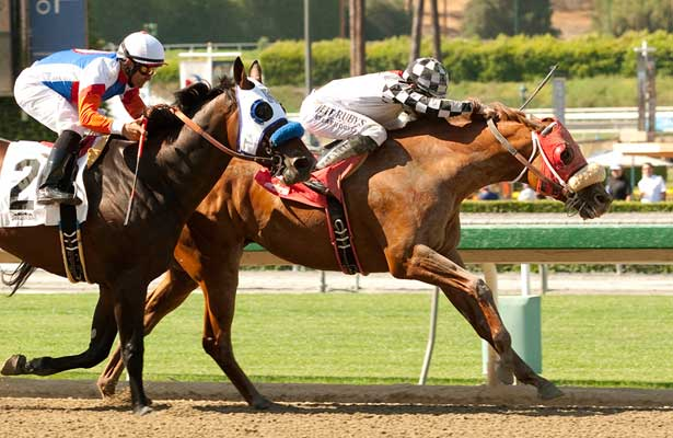 Clubhouse Ride wins 2014 Californian.