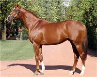 /horse/Corinthian