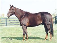/horse/Crafty Prospector