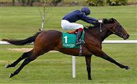 /horse/Cristoforo Colombo