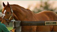 /horse/curlin