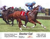 /horse/Doctor Cal