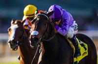 Dancingtothestars wiith jockey Mario Gutierrez aboard wins the 2014 Megahertz Stakes.