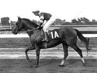/horse/Deputed Testamony