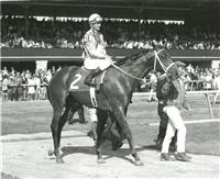 Winning the Blue Grass (1967)