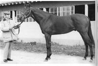 Dr Fager 2