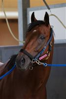 Earnestly in his stall after winning the Takarazuka Kinen in record time on June 26th, 2011.