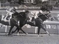 Breeder's Cup 1984 near the wire at Hollywood