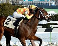 Fierce Boots winning the 2014 Busanda at Aqueduct.