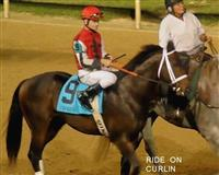 Ride On Curlin With Jockey Calvin Borel....9/7/13 before The Iroquois At Churchill Downs