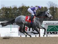Flashpoint breaks maiden at Aqueduct (1-15-11).