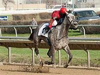 /horse/Flashy American