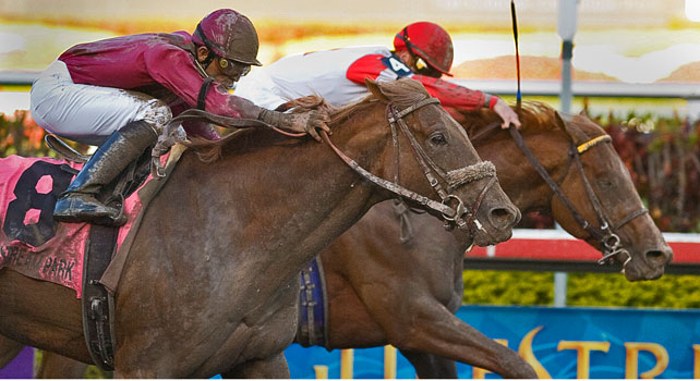 Longshot Ice Box nips Pleasant Prince by a nose on the wire of the 2010 Florida Derby
