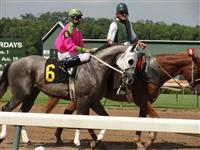 September 15, 2009: Forestry Steel in post parade for Sunny's Halo Stakes at Louisiana Downs.