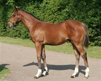 Frankel foal