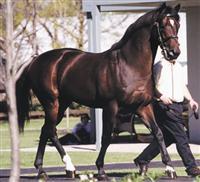/horse/fusaichi pegasus