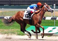 /horse/Gambling Geraldine