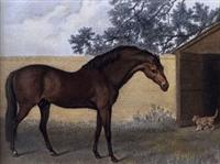 /horse/Godolphin Arabian