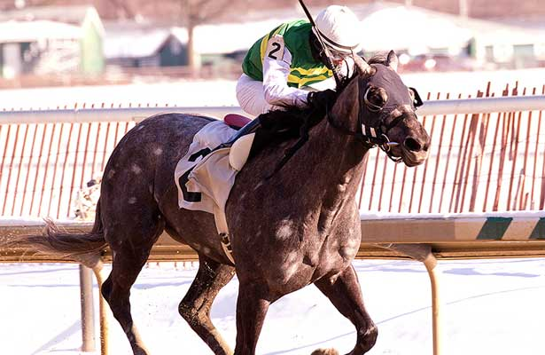 Gracer wins 2014 Marshua Stakes