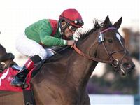 November 26, 2010.Gypsy's Warning riden by Joel Rosario win The Matriarch Stakes at Hollywood Park, Inglewood, CA 