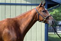 Euronfire as a 2YO in training - Aug 2010