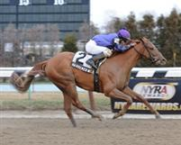 Hardened Wildcat, winner of the 2012 Fred &quot;Cappy&quot; Caposella Stakes at Aqueduct.