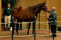 Roan Inish sells for $500,000 at Keeneland January Sale (1-12-16)
