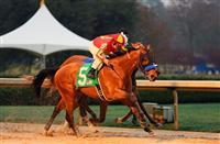 2014 Kentucky Derby Hopeful: Hoppertunity