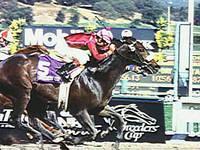 Horse Cardmania