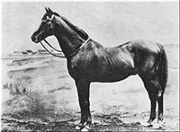 Horse Hermit big