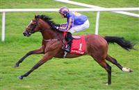 /horse/Indian Maharaja