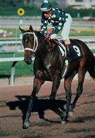/horse/Landaluce