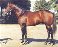 /horse/Raja Baba