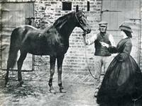 /horse/Voltigeur 1