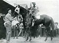 Horse Zev big