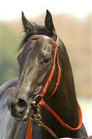 /horse/Hot Danish