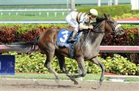 House Rules romps to victory in the 2015 Bal Harbour Stakes