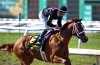 I'm a Chatterbox Breezes for Kentucky Oaks
