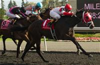 International Star wins 2014 Grey Stakes.