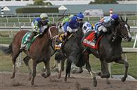 Handicapping the Besilu Stables Florida Derby
