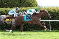 Kitten's Point Bewitching on Closing Day at Keeneland