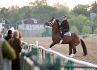 /horse/Luv Gov