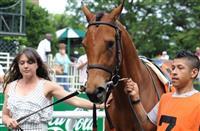 /horse/Lady Eli