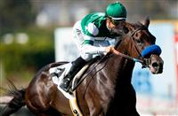 Lady of Shamrock Headlines Gamely Stakes
