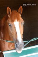/horse/Lakerville