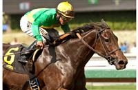 Light the City, winner of the 2014 Anoakia Stakes