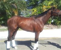 /horse/Longwood Lane