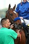 /horse/Loup Breton