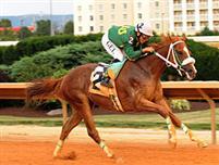 /horse/Lucys Bob Boy