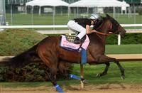 April 18, 2015 Kentucky Derby and Oaks contenders at Churchill Downs. Luminance (Miguel Mena up) works 4F in :46. Owner Kaleem Shah, trainer Bob Baffert. By Tale of the Cat x Siren Serenade (Unbridled's Song) ©Mary M. Meek/ESW/CSM
